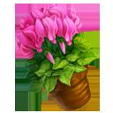 Pink Sowbread Vase