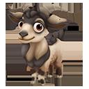 Maori Goat