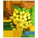 Golden Rain Boutonniere