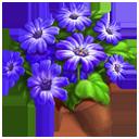 Florist's Cineraria Pot