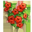 Hibiscus Trellis