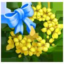 Golden Rain Wreath