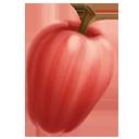 Malay apple