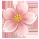 Okame Blossom Flower